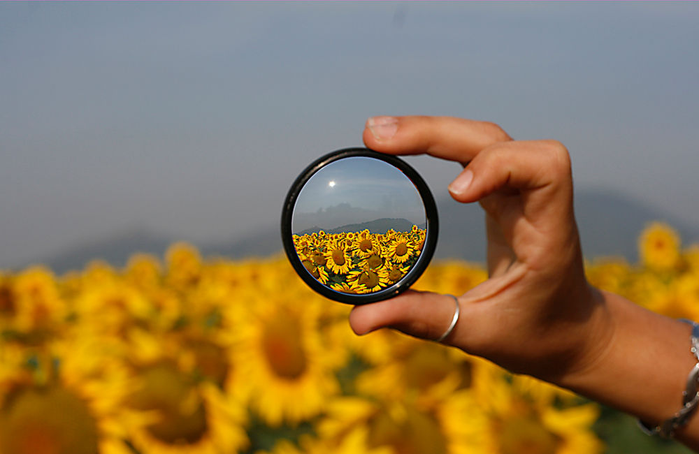 sunflowers-through-glass